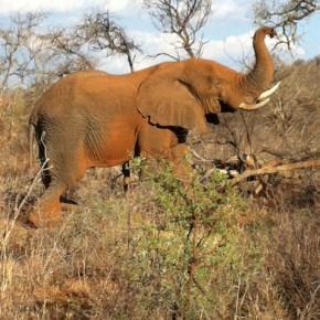 Day 2 Botswana - 'Dumela Botswana!'